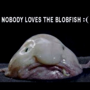 Nobody loves the blobfish